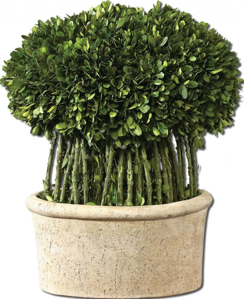 Vinings Lighting Inc in Alpharetta, Georgia, United States, Uttermost 60108, Uttermost Willow Topiary Preserved Boxwood, Preserved Boxwood